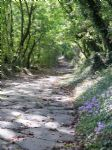Walking holidays in Italy - Via Francigena - Siena to Montefiascone - Click Here For Larger Image