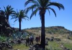 Walking holidays in Spain - Canary Islands -  La Gomera - Hotel to Hotel Trek - Click Here For Larger Image