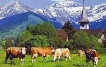 Walking holidays in Switzerland -  Aeschi - Click Here For Full Details